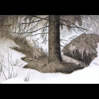Skogens vinterhave