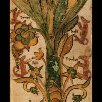 Les 4 cerfs de l'Yggdrasill (image extraite d'un manuscrit islandais du XIIIème siècle)