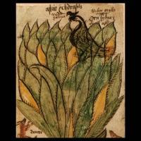 Hraesvelg, le faucon à la cime de l'Yggdrasill (image extraite d'un manuscrit islandais du XIIIème siècle)