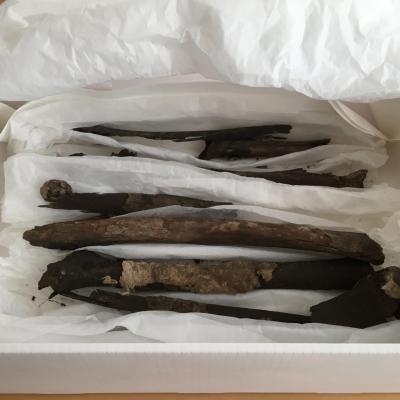 Danemark - Ces os humains recouverts en partie de tissus de la tombe de Bjerringhøj, à Mammen, avaient disparu depuis plus d'un siècle - Photo: Musée national du Danemark