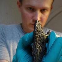 Danemark - Le Dr Leszek Gardela examine la tête de hache découverte dans la tombe d'une femme slave à Bogøvej - Photo: Mira Fricke