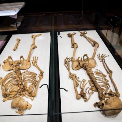 Danemark - Les deux squelettes de Vikings danois, membre de la même famille, enfin réunis au Musée national - Photo: Ida Marie Odgaard Ritzau /AFP