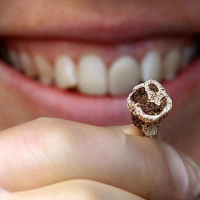 Une dent retrouvée dans le bateau tombe de Swordle Bay - Photo Pieta Greaves pour AOC Archeology