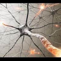 Lamyéline, gaine d'isolation descellules nerveusesducerveauet de lamoelle épinière, endommagée par des lésions