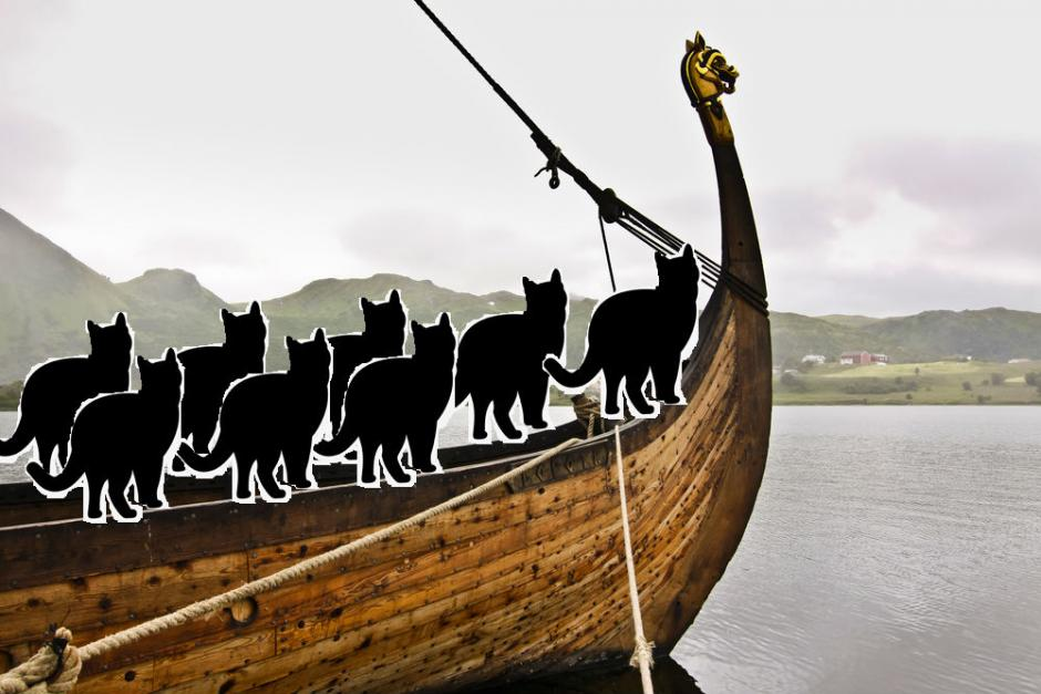 Les vikings voyageaient avec des chats - Illsutration: Videnskab.dk