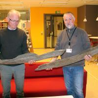 Norvège -  L'architecte Roald Landøy et l'archéologue Lars Øyvind Birkenes tenant les deux pièces de bois de l'Âge Viking - Photo: municipalité du Hordaland