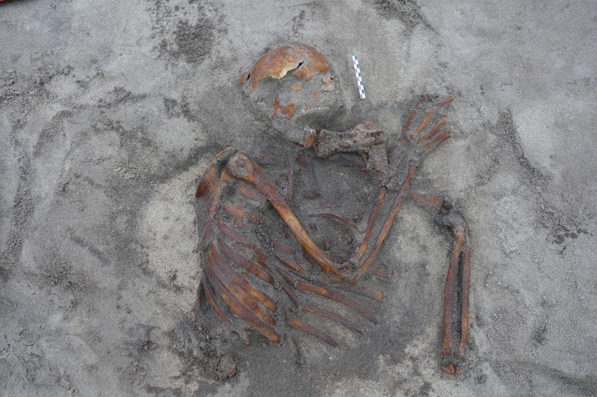 Norvège - Le squelette découvert à Gimsøya et sa hache étrangement placée - Photo: Musée universitaire de Tromsø