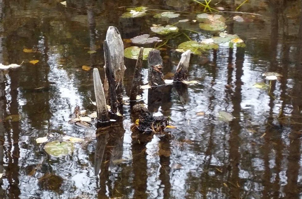 Piège à poissons de l' Âge Viking trouvé à Sysle, photo: Bernt- Egil Tafjord