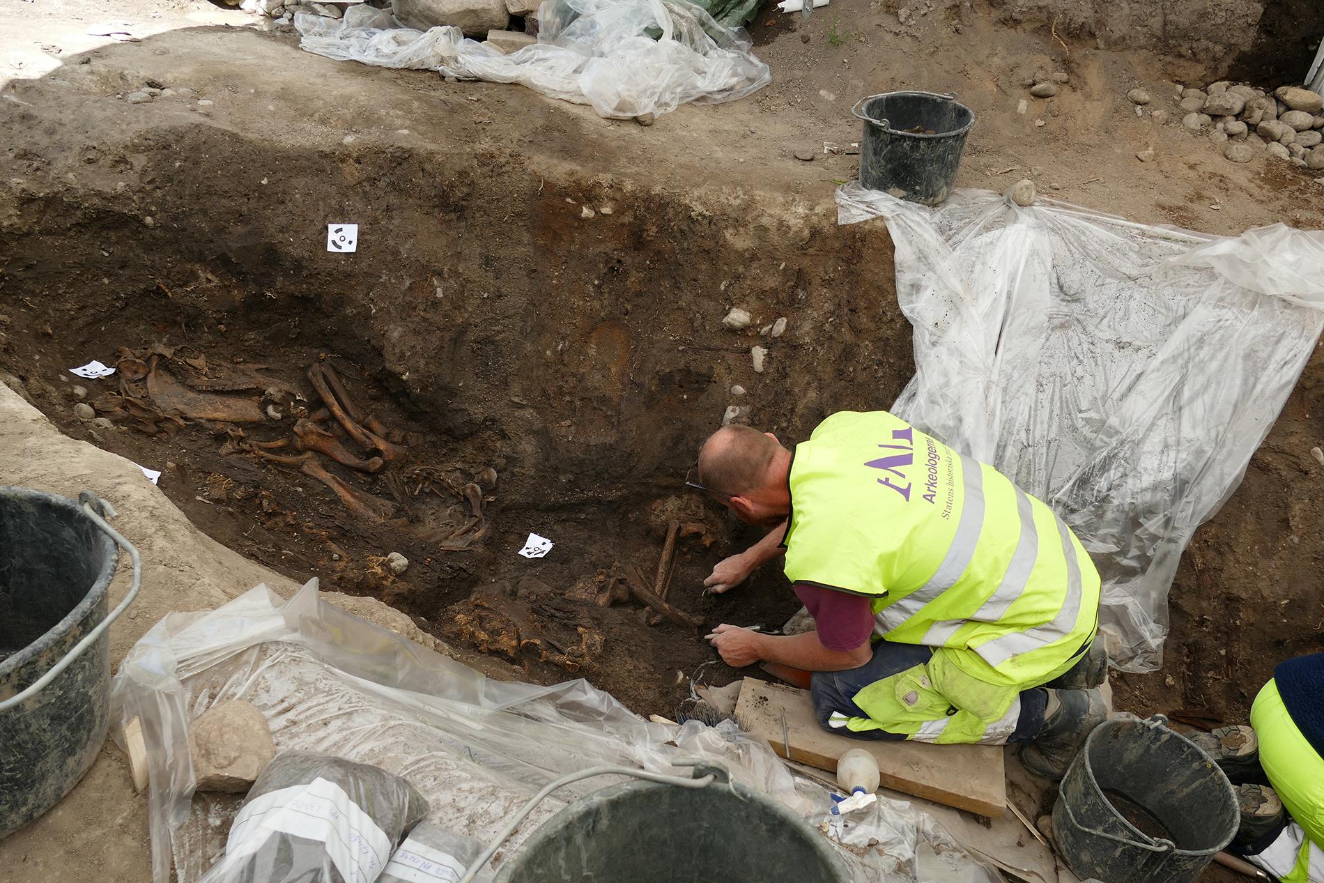 Suède - Les ossements d'un cheval et d'un chien dans l'un des deux bateaux tombes découverts à Gamla Uppsala - Photo: Statens Historiska Museer