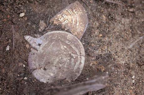 Suède - Un trésor viking de pièces d'argent arabes découvert sous un cairn de 2000 ans
